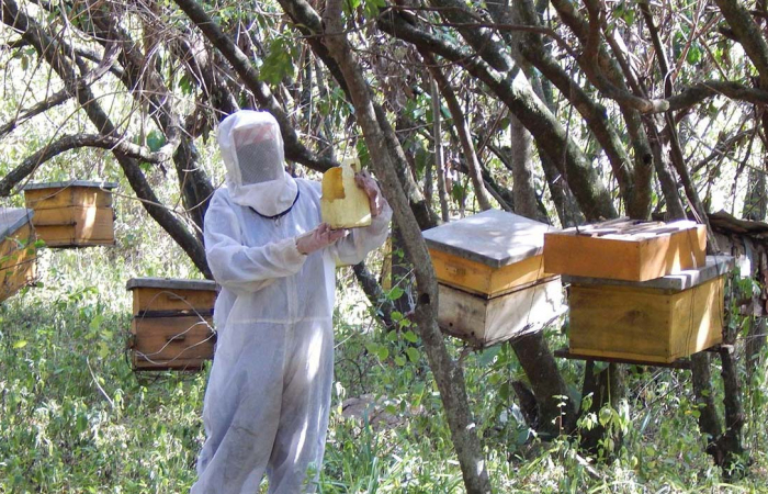 Beekeeper training